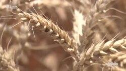 Ўттиз йилда ҳам косаси оқармаган ўзбек фермери