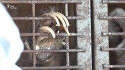 У Запоріжжі на стоянці в фургоні тримають циркового ведмедя: власники шукають для нього дім – відео