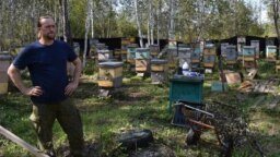 "Sergei Surovtsev has 100 beehives on his homestead in Russia's Far East. ""When I come here, I enter a meditative state,"" he says."