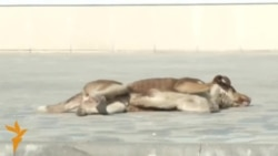 Некоторые бездомные собаки в Сочи нашли приют