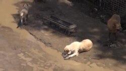 В Тбилиси затопило собачий приют