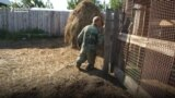 After Losing Feet, Russian Farmer Stands Strong