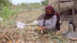 خانمی که در ولایت پروان سرپرستی خانواده خود را بر عهده دارد