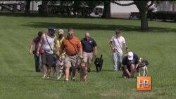 Собака - друг ветерана