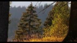 În sălbăticie: animale filmate în pădurile României