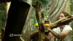 Heyvanlar Almaniya-Ukrayna oyununa proqnoz verir- [Video]