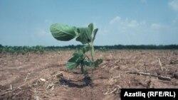 Полуостров больше не зеленый: в Крыму исчезает растительность