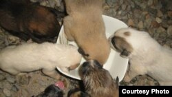 پناهگاه پردیس تبریز، برای حیوانات بدون سرپناه