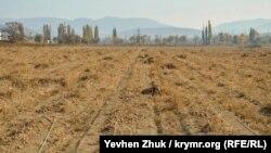 Неубранный урожай лука на поле