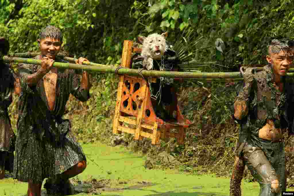Men from the ethnic Miao minority in China's Guizhou Provincecarry a dog -- wearing a costume and seated on a stool as a form of respect because they believe canines found water for their ancestors -- during a local festival on August 15. (Reuters)