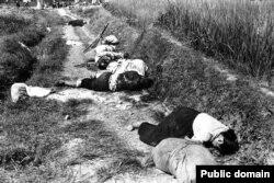 جسد غیرنظامیان کشتهشده در حملات ماه اوت ۱۹۵۰ در نزدیکی یونگسان، امروزه کره جنوبی