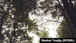 ФОТА ДНЯ: Беларускія краявіды. Сяржук Тутэйшы.