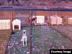 Так выглядит наспех устроенный муниципальный приют для собак