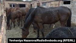 Коні-переселенці