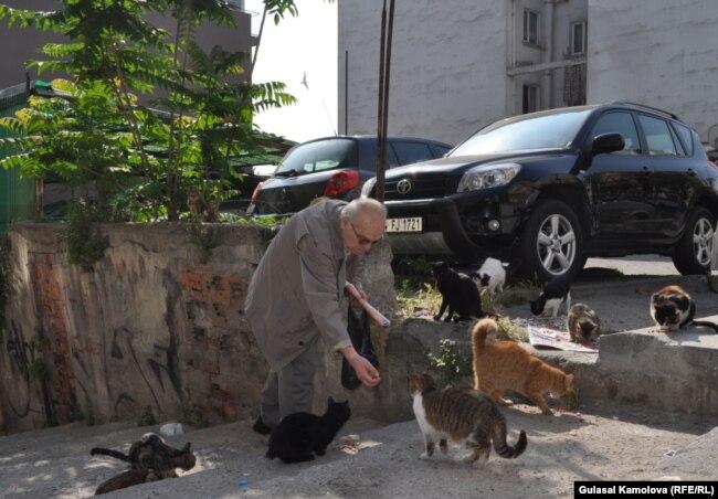Житель Стамбула кормит бродячих кошек