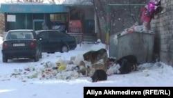 Бродячие собаки на городской свалке. Талдыкорган, 25 января 2012 года.