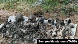 """Братская могила. Останки расстрелянных в 1937 году по приговору """"троек"""" людей, найденное в Сандармохе"""