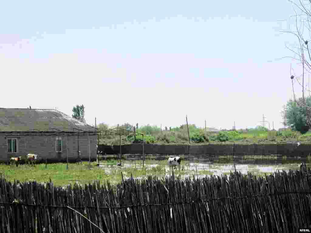 Sabirabad rayonun Xankeçən kəndində 63 ev su altında qalıb