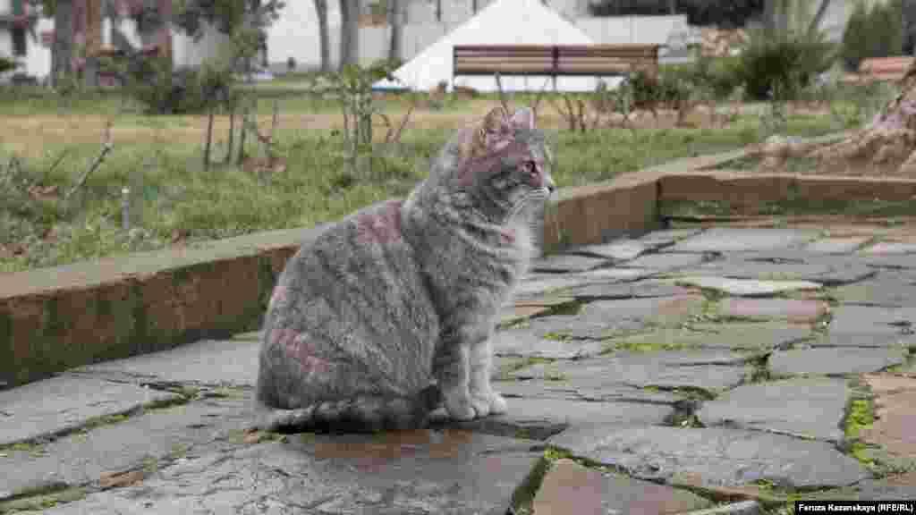 Кот в Бахчисарае