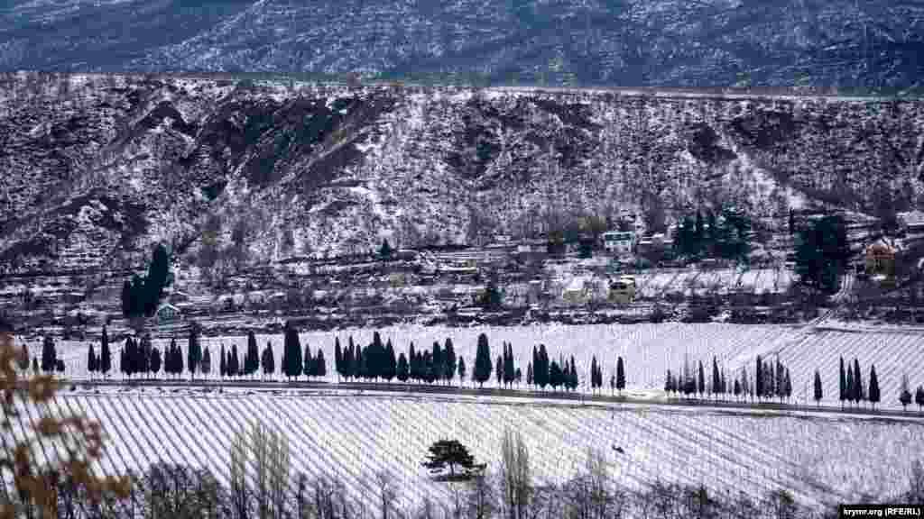 Кипарисы вдоль автодороги от Алушты до села Изобильное