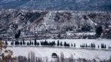 Кипариси уздовж автодороги від Алушти до села Ізобільне