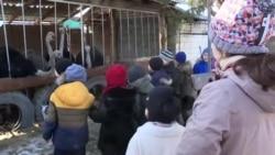 «Страусиные яйца хорошо продаются». Как живет ферма на окраине Бишкека