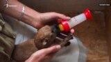 Казанцы спасли семерых щенков от неминуемой гибели