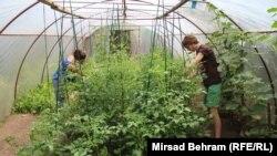 Uzgoj organske hrane u Mostaru