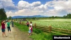 Долина нарцисів – заповідний масив, що розташований в урочищі Кіреші, за 4 кілометри від міста Хуста Закарпатської області
