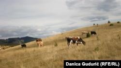 Za bolji život na selu potrebni su i bolji putevi i struja: Vule Pušica