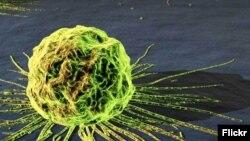 Ракові клітини, ілюстративне зображення