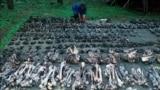 Фрагменты останков жертв массовых расстрелов, захороненных на полигоне Медное