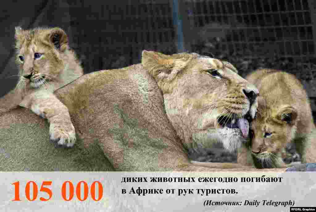 Большое число животных люди истребляют при помощи пуль, капканов и ловушек, ядов и прочих средств.