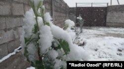 Весенний снег в Таджикистане