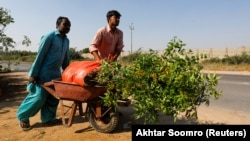 Pakistanda ağac əkimi