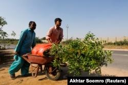 Пакистанские рабочие сажают деревья вдоль дороги незадолго до начала пандемии коронавируса
