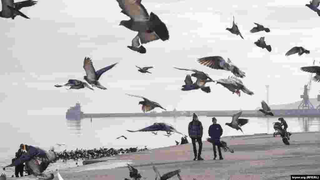 С окончанием календарной осени и наступлением декабря феодосийцы включают в расписание пункт «покормить птичек». Вблизи порта на волнах и в небе кружатся стаи