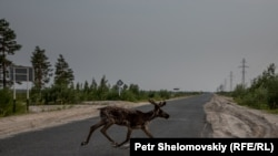 Ямало-Ненецкий автономиялық округі, Ресей (Көрнекі сурет).
