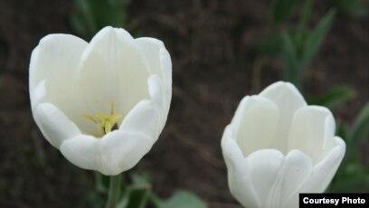 саламдашуу 8-мартка
