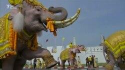 Слони також привітали нового короля Таїланду з його сходженням на престол – відео