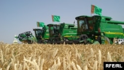 Wheat production is a significant part of the agricultural sector in Turkmenistan.