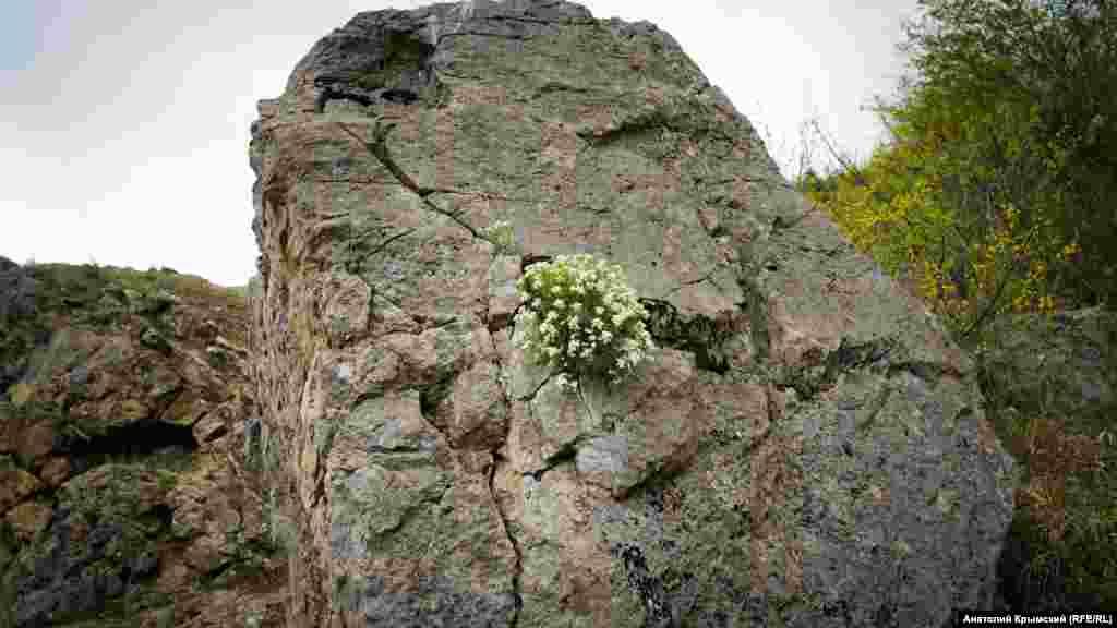В скальной расщелине прижились цветы