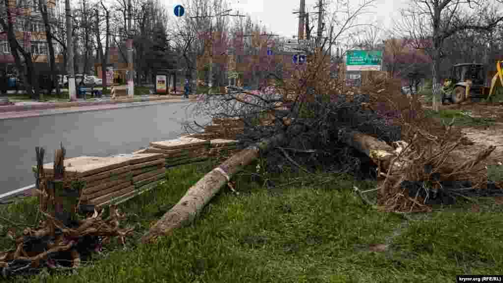 Некоторыми отнюдь не старыми деревьями дорожникам пришлось пожертвовать