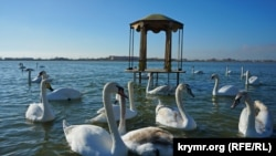 Крым, Раздольненский район, озеро Сасык-Сиваш