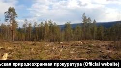 Вырубка леса в Иркутской области
