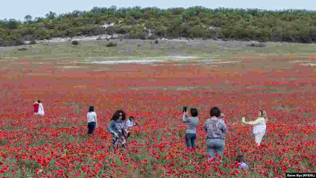 В конце мая в разных уголках Крыма зацветают маки. В этом году цветы распустились в отдельных теплых местах