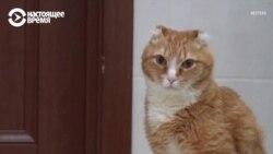 3D-протезы для Рыжика и Дымки: уникальные операции сибирских ветеринаров