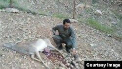 گوزن زرد ایرانی که در لرستان کشته شد