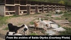 В настоящее время в гагрском приюте «Топа» живут 180 собак, хотя он строился в расчете на 100, поэтому не может вместить всех нуждающихся