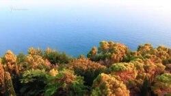 Крымский особняк Ахметова – с высоты птичьего полета (видео)